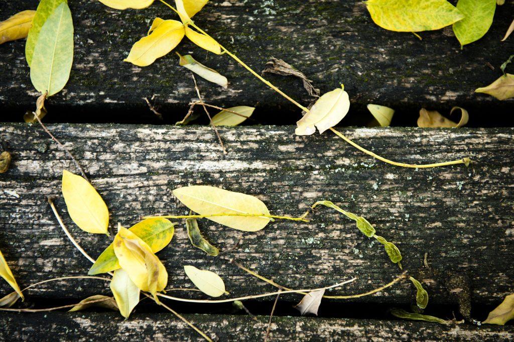 profocus ősz