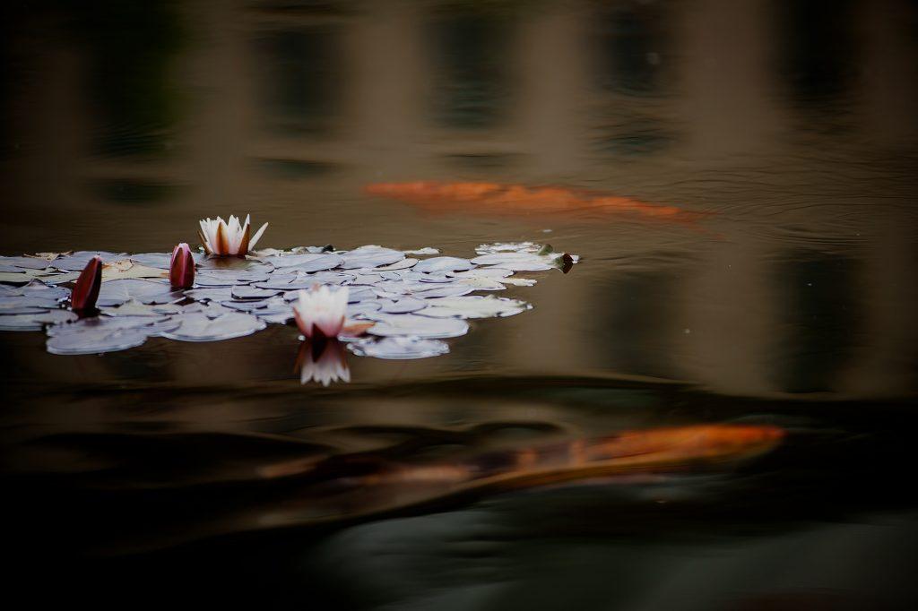profocus.hu lake